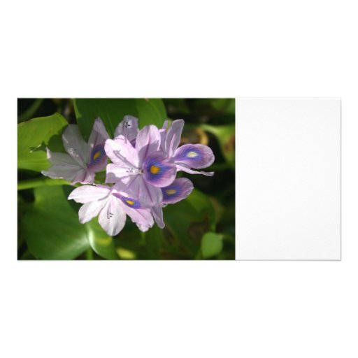 purple white flowers with eyes personalized photo card
