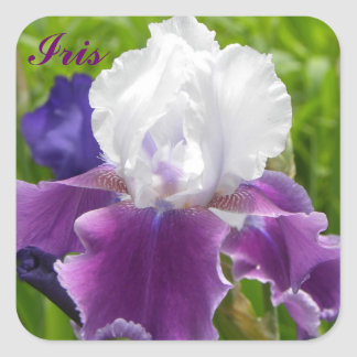 Purple & White Iris - Customizble Sticker