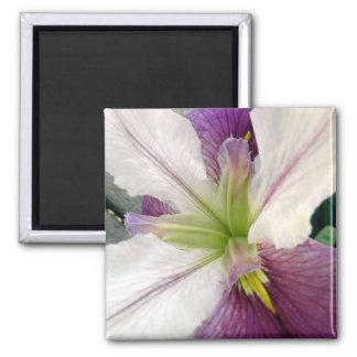 Purple & White Iris Flower Floral Photo 2 Inch Square Magnet