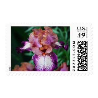 Purple & White Iris.. Postage