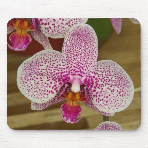 Purple & White Orchid Mouse Pad
