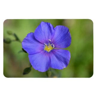 Purple Wild Flower magnet