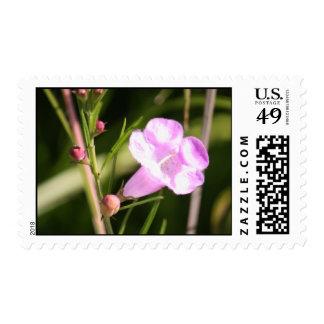 Purple wild flower postage