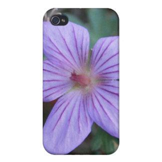 Purple Wildflower 4/4 s iPhone 4 Cases