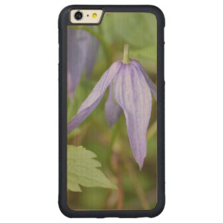 Purple Wildflower Carved® Maple iPhone 6 Plus Bumper Case