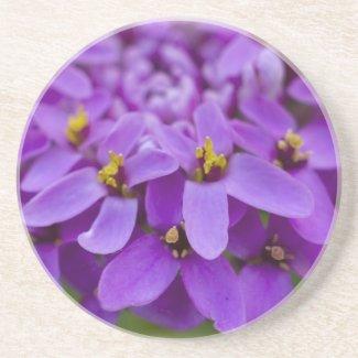 Purple Wildflower Coaster coaster