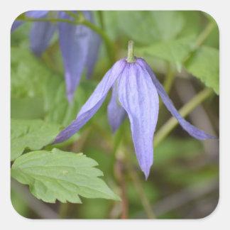 Purple Wildflower Square Sticker
