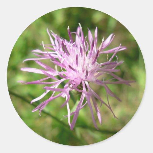 Purple Wildflower Sticker
