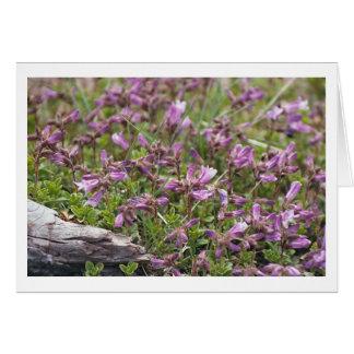 Purple Wildflowers Card