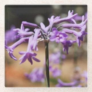 Purple Wildflowers in Portugal Glass Coaster