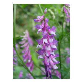 Purple Wildflowers on Blue Ridge Parkway Postcard