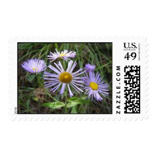 Purple Wildflowers Postage Stamp