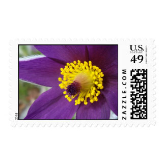 Purple Wonder - Stamps