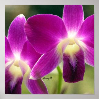 Purple wonders poster