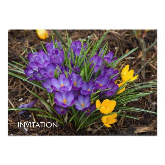 Purple & Yellow Crocuses DSC5930 Card
