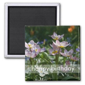 Purple & Yellow Tulips DSC0853 2 Inch Square Magnet