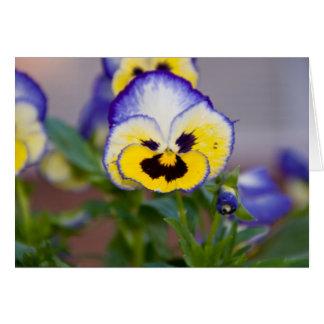 Purple,Yellow,White Pansy Greeting Card