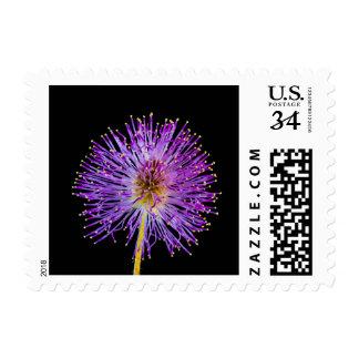 Purple & Yellow Wild Flower Stamp
