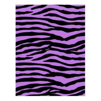 Purple Zebra Stripes Postcard