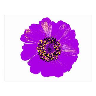 Purple Zinnia Flower Postcard