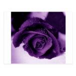 purplerose tarjetas postales