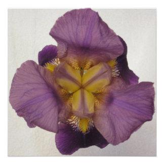 Púrpura barbuda del iris