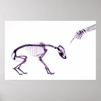 Púrpura blanca esquelética de la mala radiografía  póster