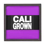 Púrpura crecida Cali 2