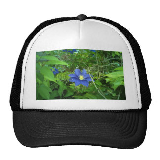 púrpura de la flor del clematis gorras