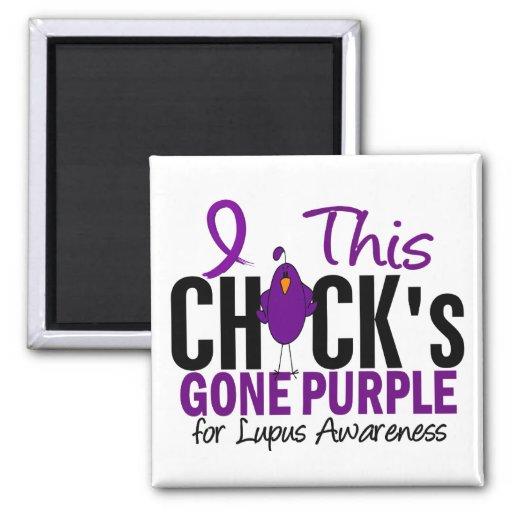 Púrpura ida polluelo del LUPUS Iman