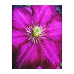 púrpura perfeccione lona envuelta para galerías
