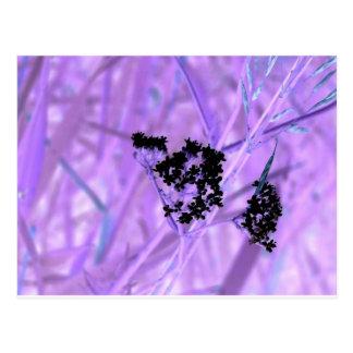 Púrpura Postal