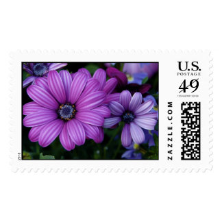 Púrpura y flores de Lavendar Sello
