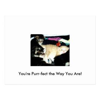 Purr-fect Greetings Postcard