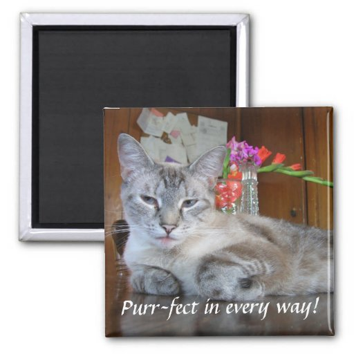 Purr-fect in every way! magnet