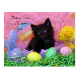 Purrfect Easter Wishes! (2978) Postcard