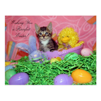 Purrfect Easter Wishes! Postcard
