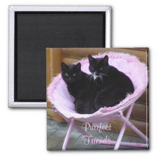 Purrfect Friends Cat Theme 2 Inch Square Magnet