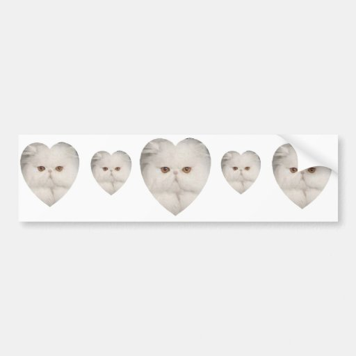 Purrfect Kitty Bumper Stickers