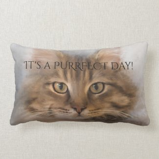 Purrfect Tabby Maine Coon Cat Pillow