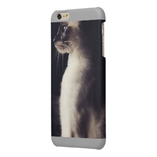 purrfection glossy iPhone 6 plus case