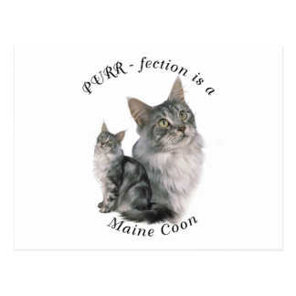 Purrfection Maine Coon Postcard