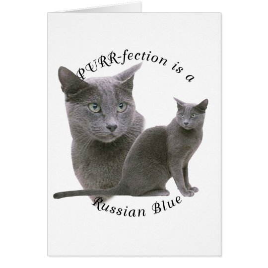 PURRfection Russian Blue Card