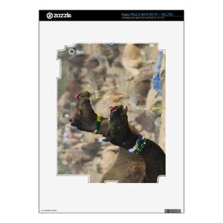 Pushkar Camel Fair, Pushkar, Rajasthan, India iPad 3 Decals