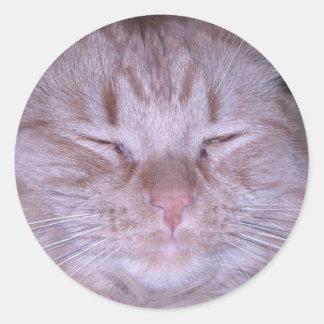 Puss amargo/gatito anaranjado del Tabby Pegatina Redonda