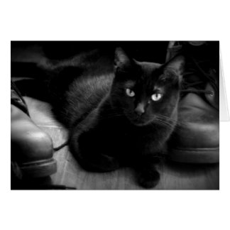 Puss And Boots Cat Photography Card