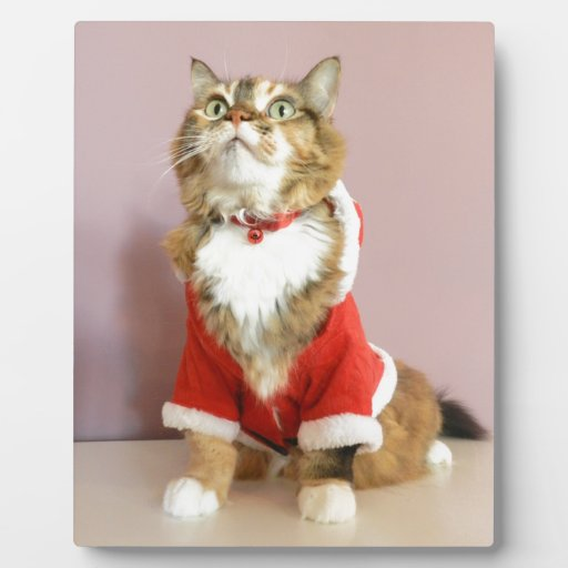 Puss de santa del gato de las Felices Navidad Placas