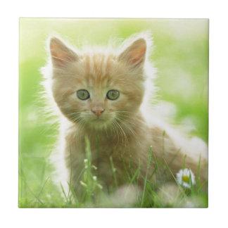 Puss en campos azulejos cerámicos