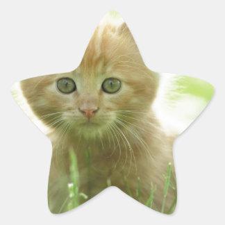 Puss In Fields Star Sticker