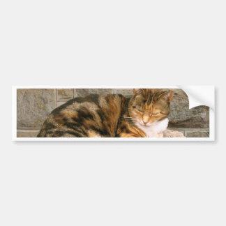 Pussels - Cat on a Stump Car Bumper Sticker